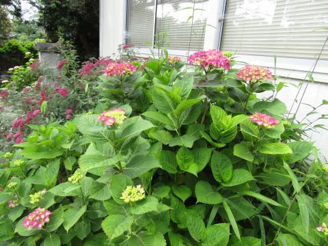やすらか庵で咲く季節の花は、心を込めた散骨にも使われます